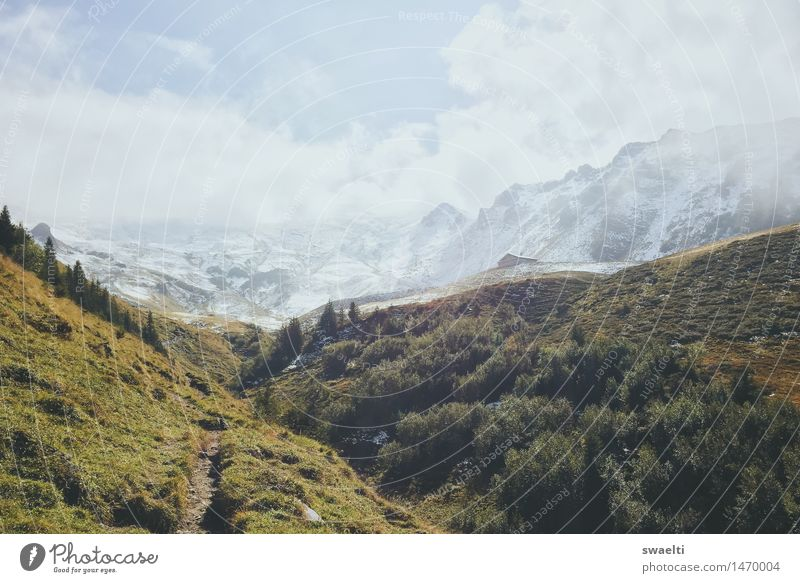 Way to the snow Nature Landscape Earth Sky Clouds Summer Tree Grass Bushes Meadow Forest Hill Rock Alps Mountain Peak Snowcapped peak Colour photo Exterior shot