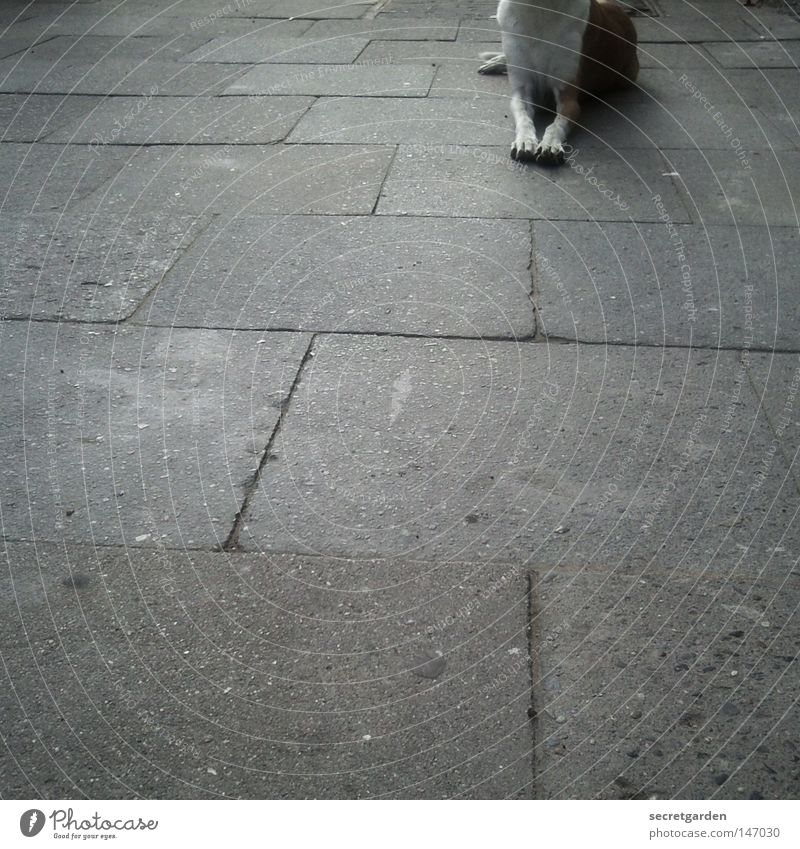 Dog City White Relaxation Loneliness Animal Winter Dark Street Sadness Gray Brown Feet Above Together Lie