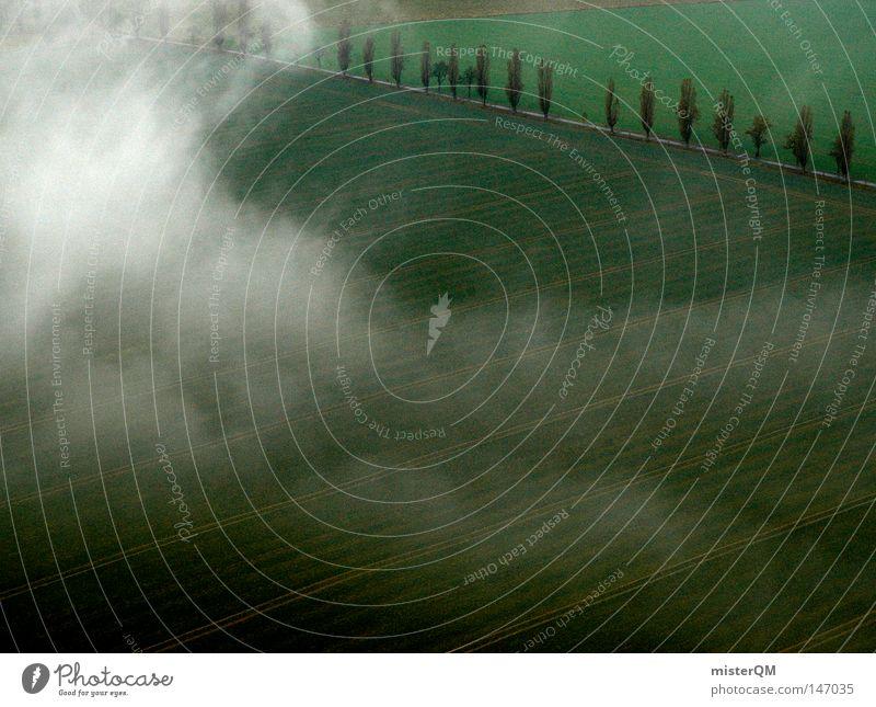 When the earth awakens - autumn day Green Dark Dream Dream world Clouds Fog Fog bank Field Agriculture Morning Avenue Tree Saxon Switzerland Street