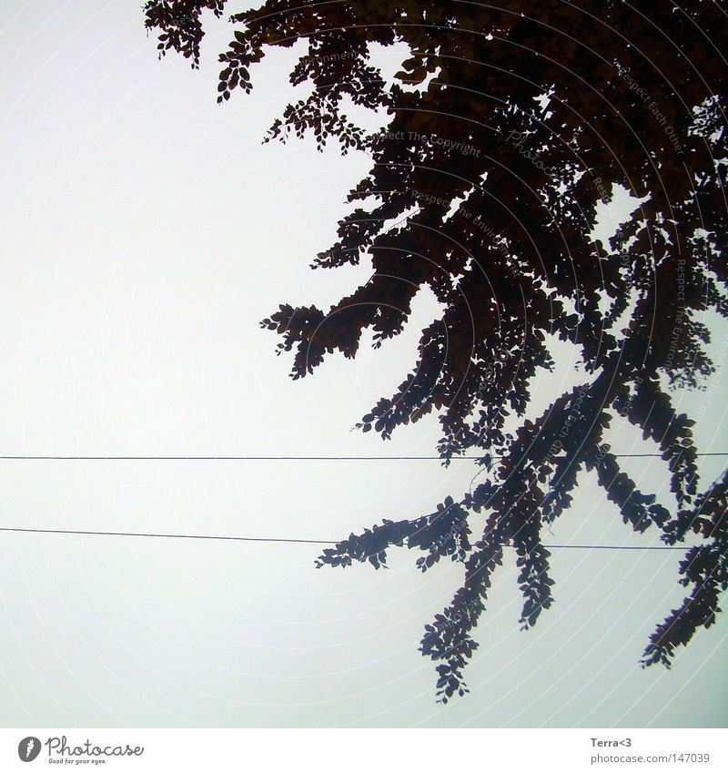 Sky Tree Leaf Clouds Black Dark Cold Autumn Gray Sadness Line Wet Electricity Gloomy Cable Grief