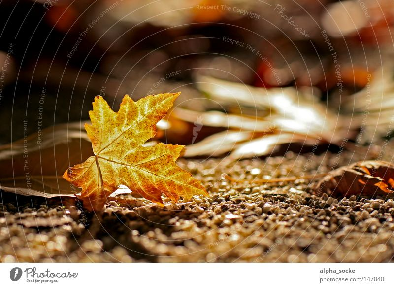 Golden October Autumn Leaf Moody Tree Brown Beautiful