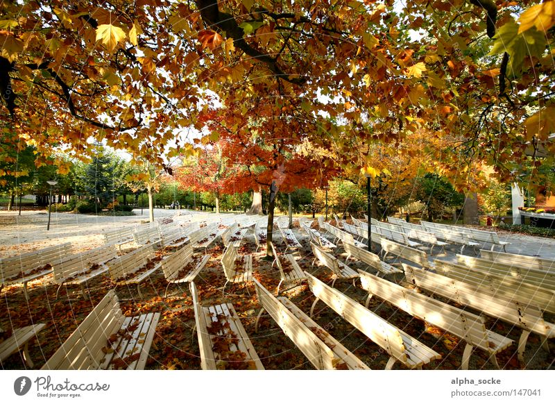 Autumn sunny days Gold Leaf Empty Calm October Bench Park