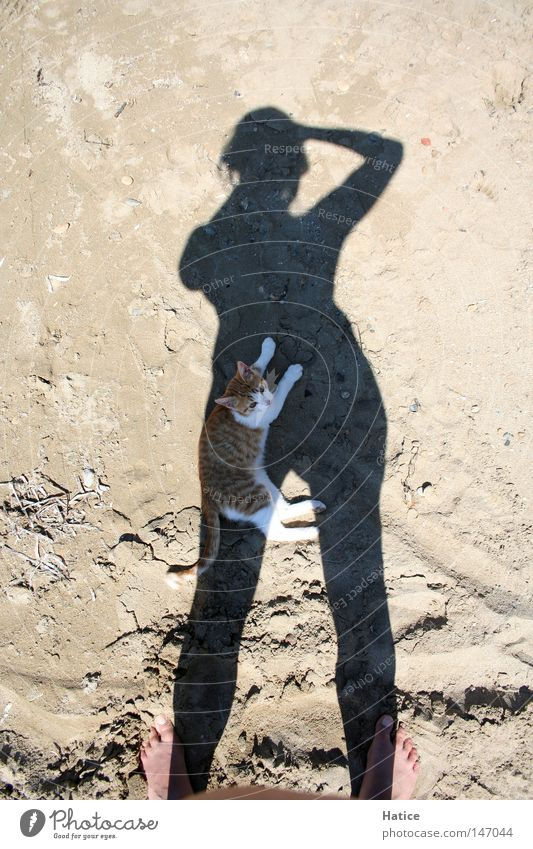 Cat in the shade Shadow Self portrait Physics Animal Take a photo Sand Beach Summer Mammal Warmth Sun