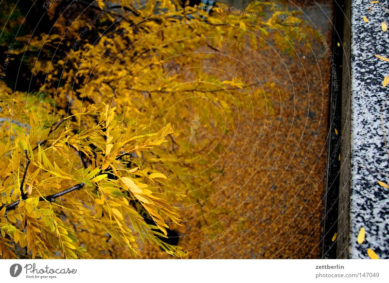 Autumn again Autumn leaves Leaf To fall Gold Leaf green Courtyard Places Sidewalk Seam Tree Tree trunk Plant Transience golden autumn fall down fall down