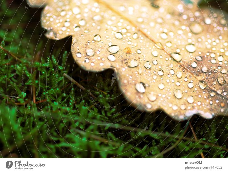In a country before our time - Autumn Day Leaf Drops of water Water Cold Fresh Macro (Extreme close-up) Close-up Woodground Calm Peace Location Nature Oak tree