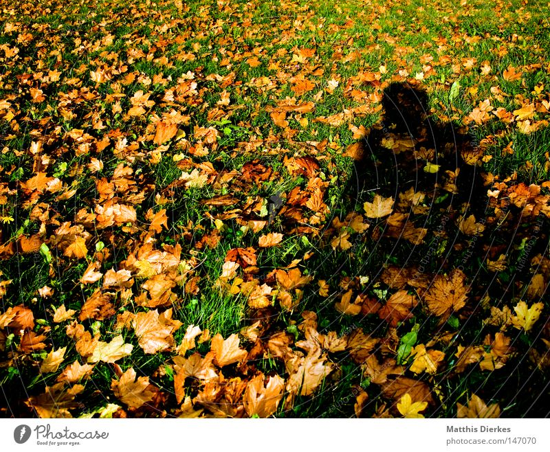 autumn shadow Leaf Brown Green Autumn Back-light Autumnal colours Red Seasons Beautiful Border Autumn leaves Cold Winter Devour Maple tree Oak tree September