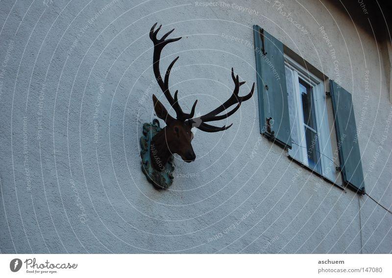 Dark Wall (building) Window Sadness Closed Bavaria Antlers Deer Shutter Germany