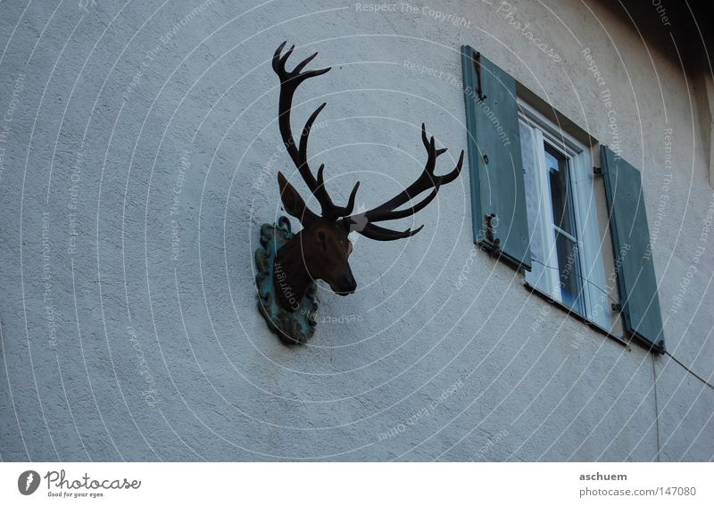 Dark Wall (building) Window Sadness Closed Bavaria Antlers Deer Shutter Germany