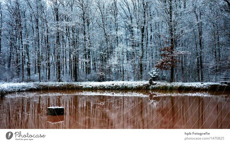 winter carp pond Nature Landscape Water Winter Weather Ice Frost Snow Field Forest Pond Relaxation Hiking Esthetic Cool (slang) Cold Brown White Moody Beautiful