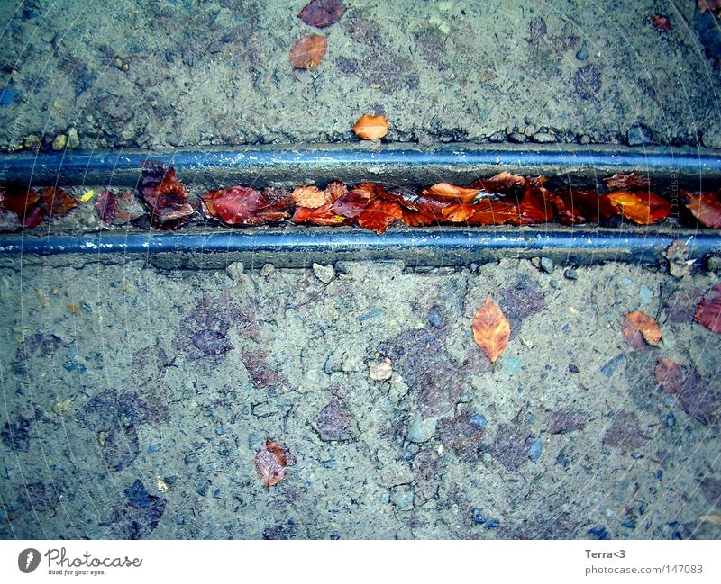Feeling down when the autumn has come ... Gutter Rain gutter Metal Metalware Leaf Street Mud Sludgy Dirty Stone Water Autumn Cold Gray Blue Red Brown Parallel
