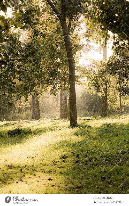 fairytale forest Forest Nature Autumn Leaf Tree Fog Calm Sun Back-light Green Brown Emotions Grief Distress