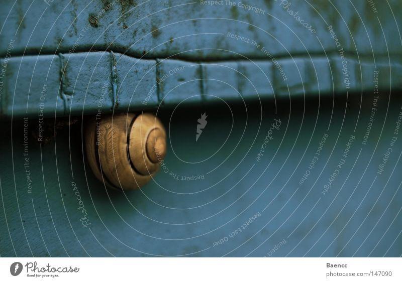 Blue Calm Animal Yellow Dirty Snail Keg