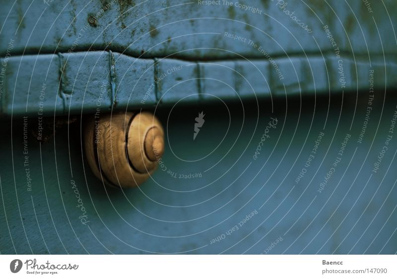 goes blue Blue Yellow Snail Keg Shadow Dirty Pattern Calm Animal
