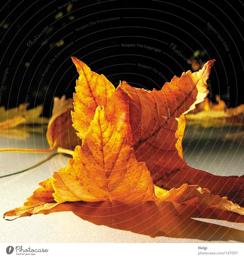 White Tree Leaf Black Yellow Colour Dark Autumn Park Bright Brown Together To go for a walk Lie To fall Transience