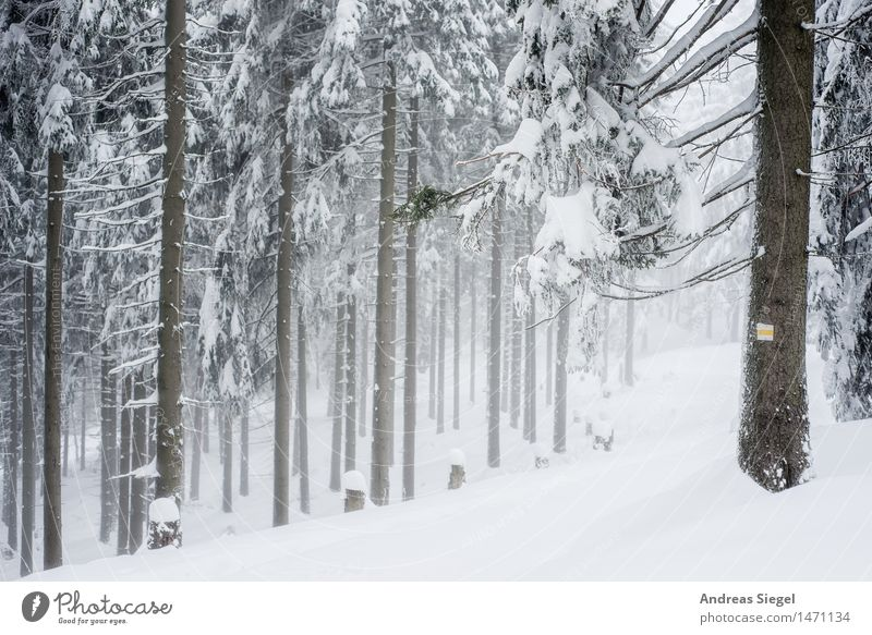 white space Environment Nature Landscape Winter Weather Ice Frost Snow Tree Spruce forest Coniferous forest Forest Hiking Cold Natural Gloomy White Adventure