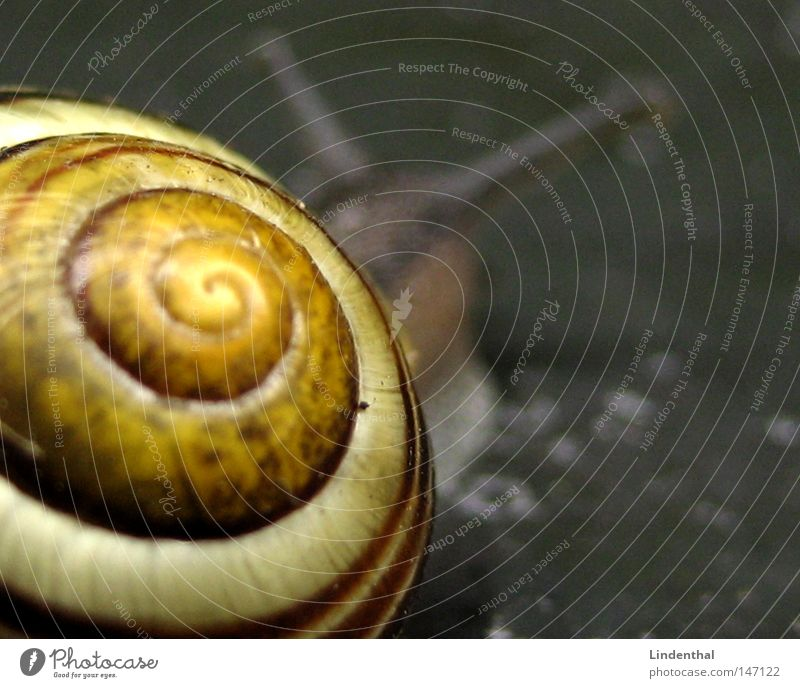 House (Residential Structure) Yellow Gray Near Snail Feeler Crawl Slowly Snail shell