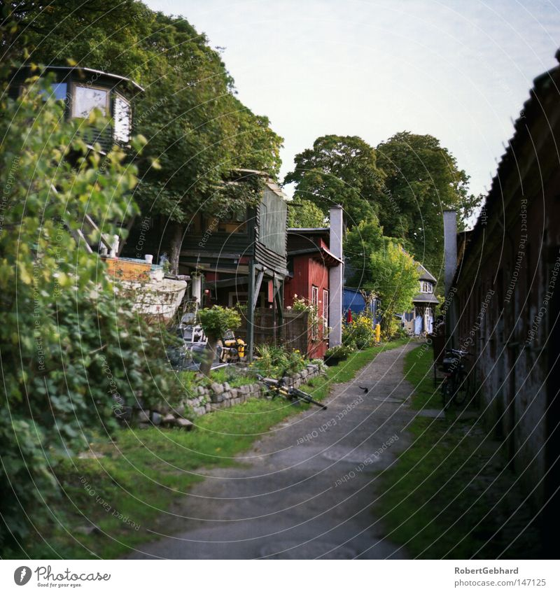 Sky Tree Green Blue House (Residential Structure) Wood Lanes & trails Flat (apartment) Europe Living or residing Hut Denmark Zealand Scandinavia Copenhagen