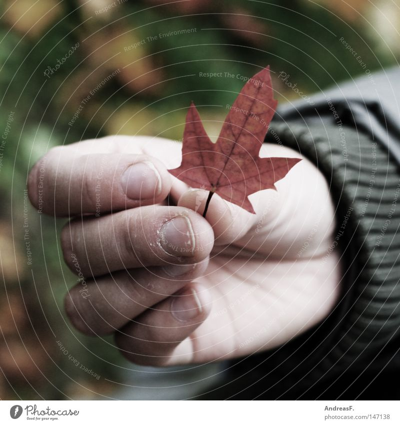 Nature Hand Leaf Environment Autumn Small Fingers To hold on Longing Ecological Autumn leaves Wanderlust Environmental protection Canada Grasp Sustainability