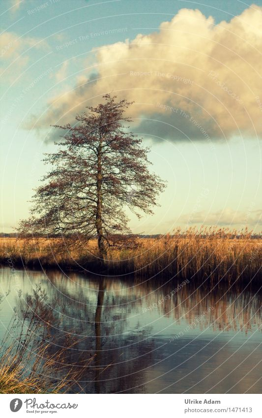 Sky Nature Blue Beautiful Water Tree Landscape Clouds Calm Far-off places Winter Art Exceptional Brown Moody Germany