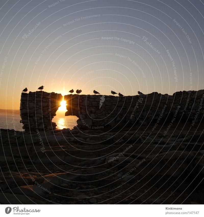 Water Sky Sun Ocean Calm Bird Rock Sunrise Seagull Portugal
