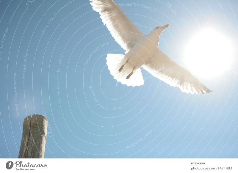 Freedom Environment Nature Sky Cloudless sky Sun Sunlight Summer Weather Beautiful weather Port City Animal Bird Seagull 1 Success Emotions Happy
