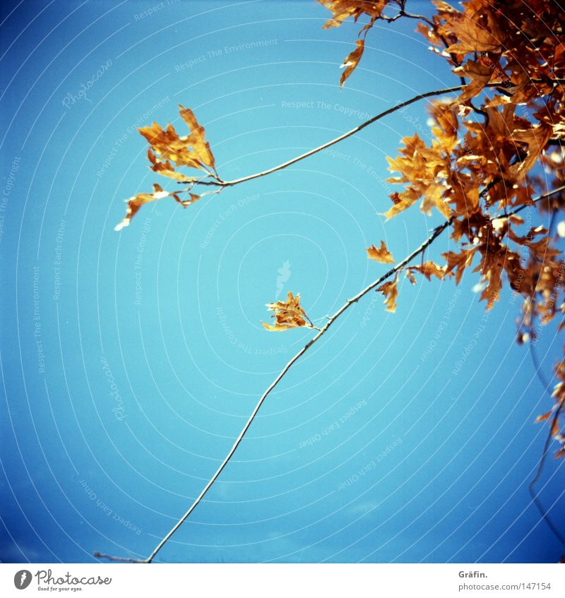 [HH 3.0] Autumn Tree Leaf To fall Yellow Dry Red Beautiful weather Transience Sky Twig Colour Orange Blue Sun Autumnal dry leaves