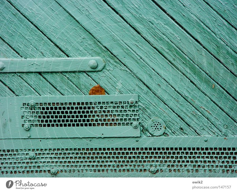 Leaf Colour Autumn Wood Dye Art Door Closed Gloomy Decoration Painting (action, work) Gate Turquoise Wooden board