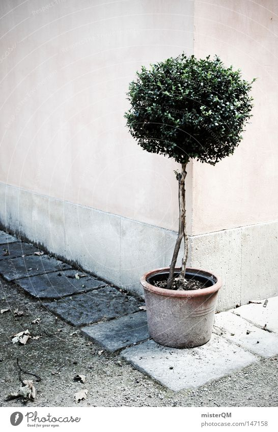 Somewhere In Italy. Bushes Garden Idyll Pot plant Wall (barrier) Corner Street corner South Tuscany Paving stone Gardener Tree Groomed Plant Green Red Dreary