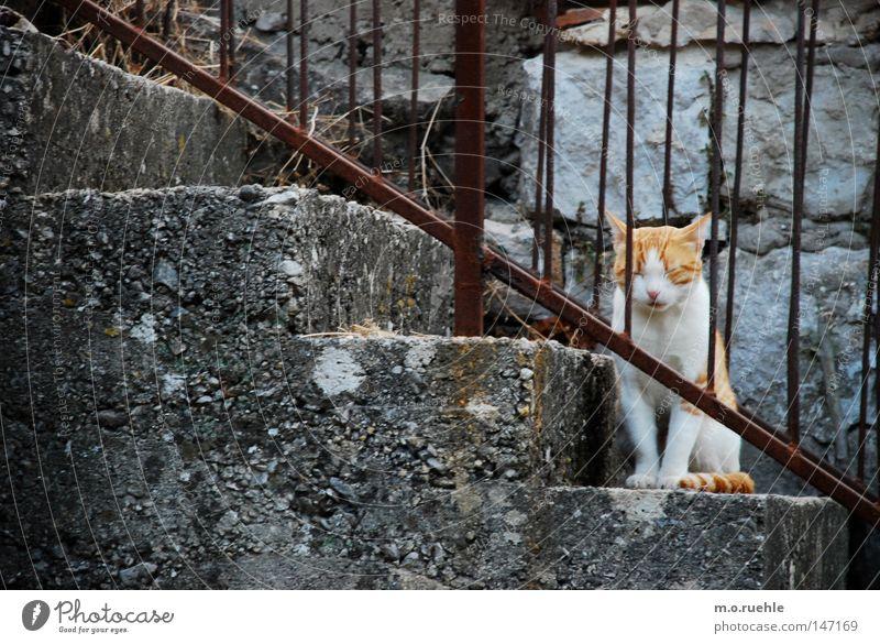 Calm Animal Cat Stairs Sweet Soft Trust Idyll Cute Animalistic Mammal Domestic cat Baby animal Plush