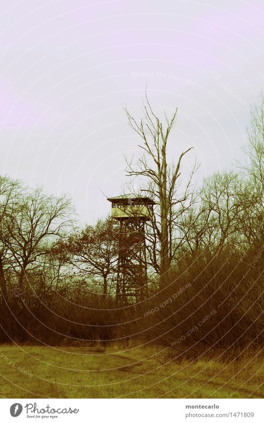 climate change | the world is becoming barren | lookout tower in a deserted nature reserve Long shot Contrast Day Abstract Exterior shot Gloomy Wild Original