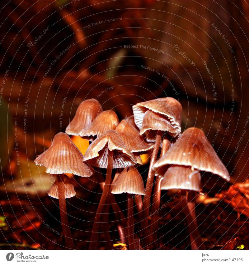 Nature Plant Yellow Life Autumn Death Wood Lamp Brown Food Growth Arrangement Multiple Nutrition Culture Seasons