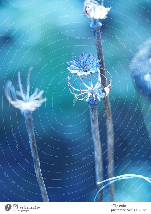 More blue 3 Nature Plant Winter Beautiful weather Flower Garden Park Esthetic Fresh Natural Blue Calm Colour photo Subdued colour Exterior shot Detail Deserted