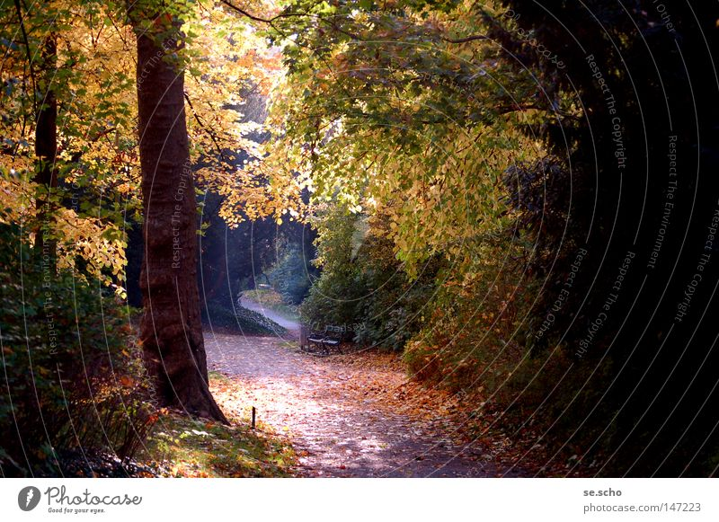 October light Autumn Light Tree Leaf Multicoloured Calm Moody Park Shadow Tree trunk Lanes & trails Bench Lamp Gold