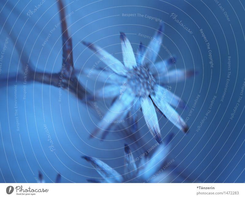 shades of blue Nature Plant Winter Flower Garden Park Esthetic Beautiful Blue Romance Attentive Calm Colour photo Subdued colour Exterior shot
