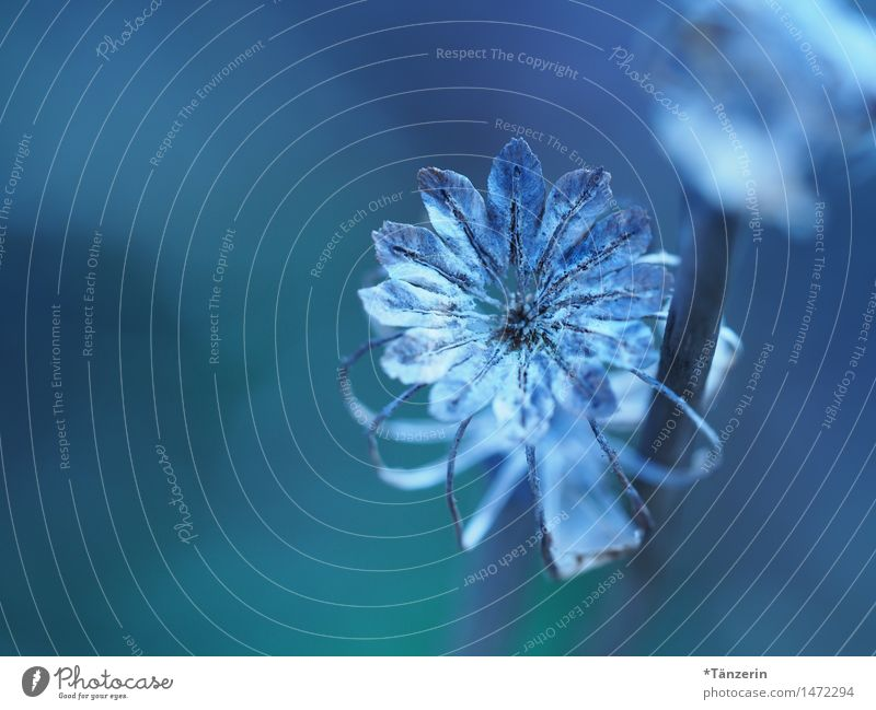 Nature Plant Blue Beautiful Calm Winter Blossom Autumn Natural Garden Esthetic Transience Beautiful weather Romance Serene