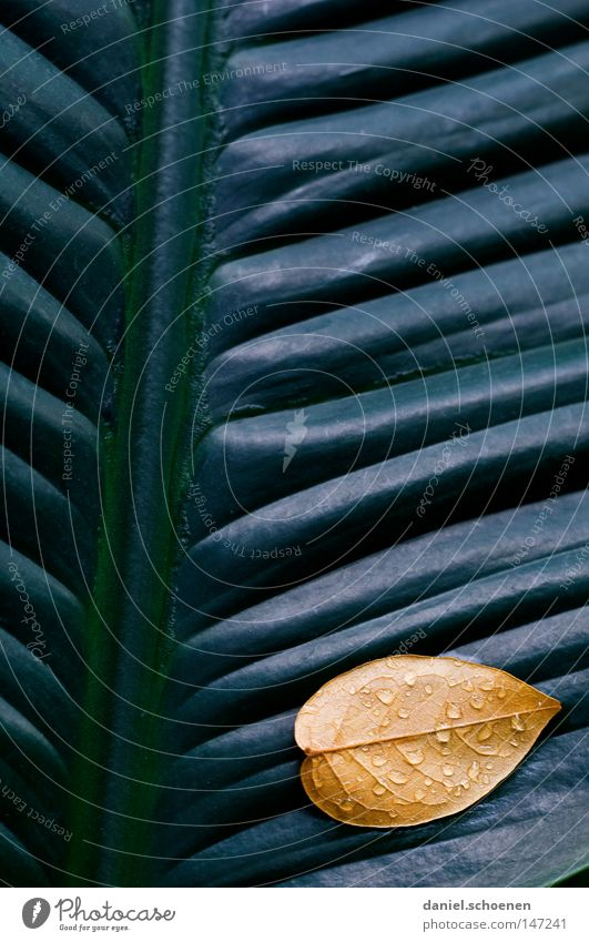 leaf on leaf Autumn Leaf Abstract Background picture Graphic Wall (building) Gray Yellow Green Grass Meadow Brown Seasons Growth Macro (Extreme close-up)