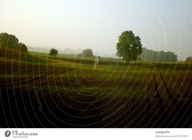 Nature Beautiful Tree Calm Autumn Landscape Field Waves Fog Environment Peace Tracks Hill Agriculture Harvest Agriculture