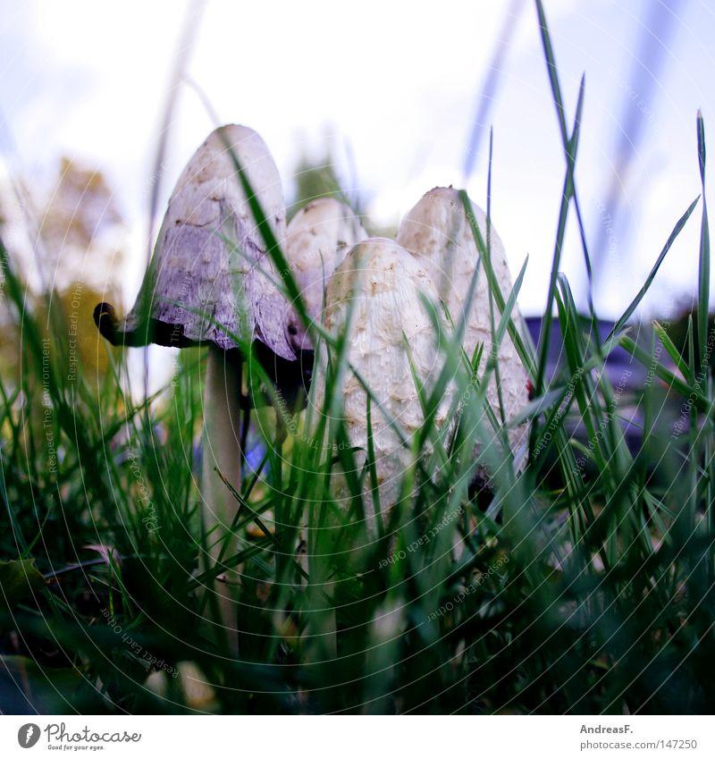 Summer Autumn Grass Motor vehicle Hide Umbrellas & Shades Mushroom Hidden Roadside Wayside Fine particles Harmful substance