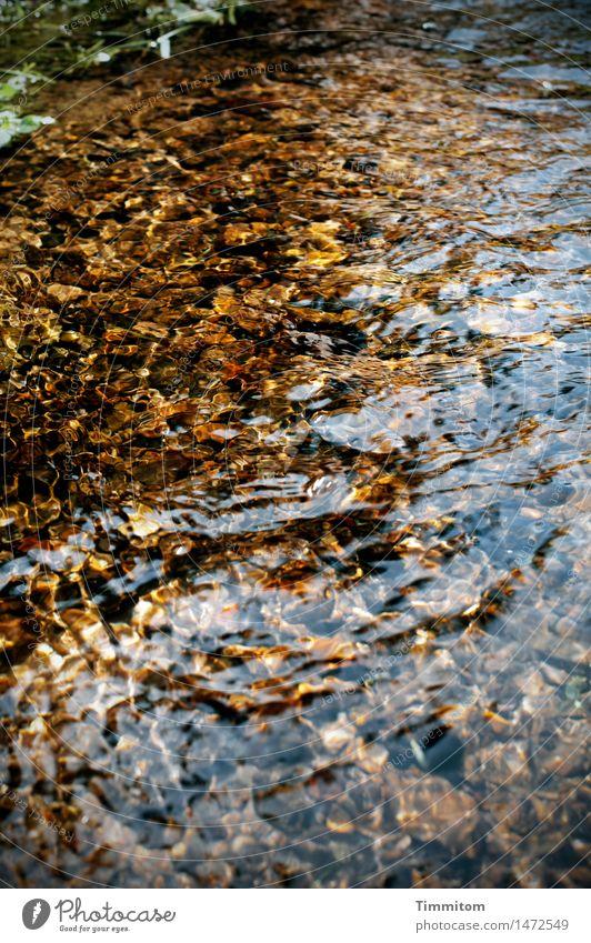 Nature Water Joy Environment Emotions Happy Illuminate Gold Esthetic Beautiful weather Elements Brook