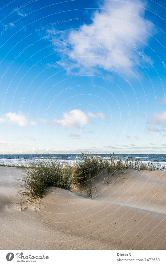 dune grass Beach Ocean Waves Nature Landscape Sand Water Clouds Horizon Weather Wind Gale Coast Baltic Sea Blue Brown Green White Darss White crest
