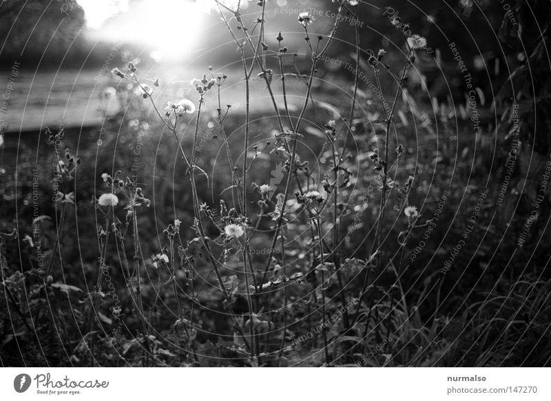 Nature White Plant Sun Leaf Black Dark Cold Autumn Emotions Blossom Garden Bushes Cool (slang) Clean Illustration