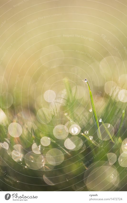 Nature Green Water Life Meadow Grass Bright Rain Glittering Growth Fresh Illuminate Drops of water Wet Uniqueness Round