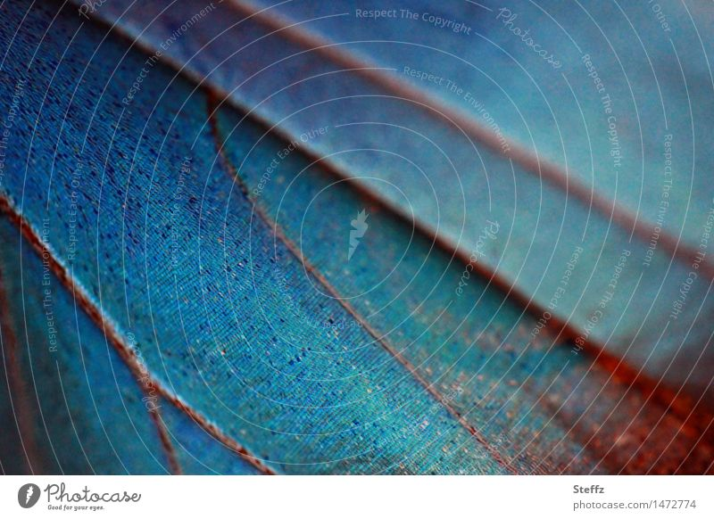 Nature Blue Colour Line Wing Living thing Butterfly Inspiration Symmetry Organic Blue tone Blue gradation Noble butterfly