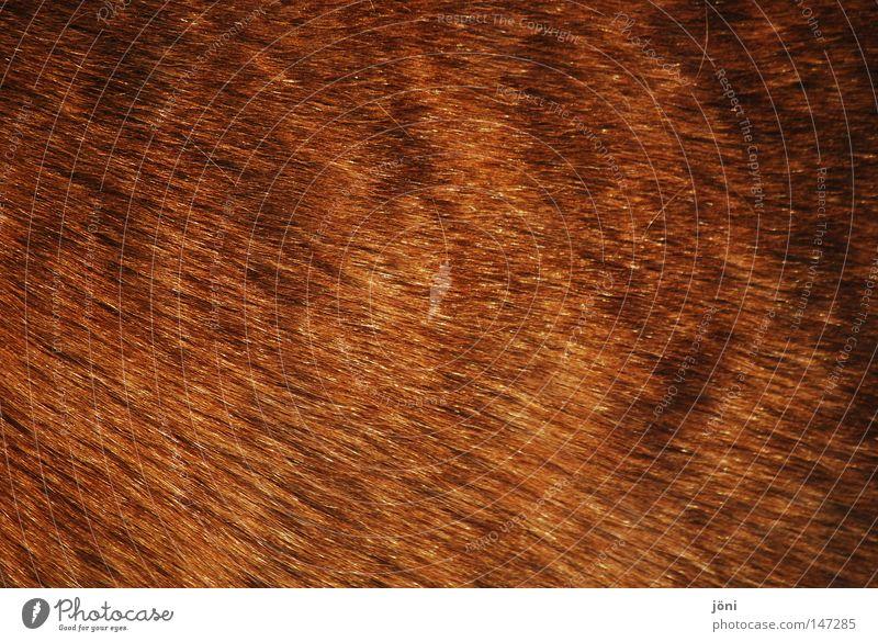 winter coat Pelt Physics Cuddly Plump Winter Cold Farm Bristles Shadow Tiny hair Fur-bearing animal Horse Farm animal Native Americans Cowboy Agriculture Clean