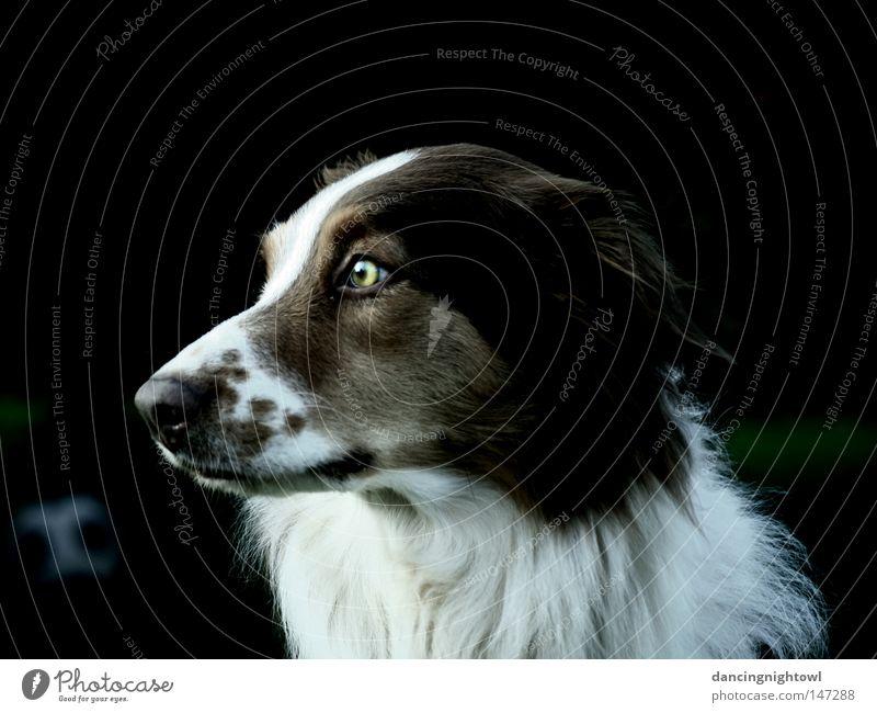 Eyes Animal Dog Pelt Mammal Pet Snout