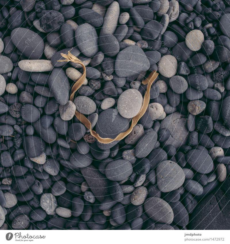 Nature Plant Ocean Landscape Beach Black Cold Coast Stone Rock Earth Round Soft Elements Iceland Shriveled