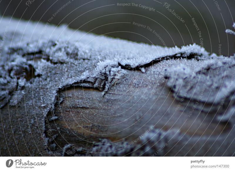 Winter Cold Snow Autumn Wood Ice Frost Tree trunk Tree bark Hoar frost Wood flour
