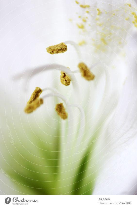 Nature Plant Green Colour White Flower Yellow Blossom Style Lifestyle Bright Elegant Esthetic Blossoming Joie de vivre (Vitality) Wedding