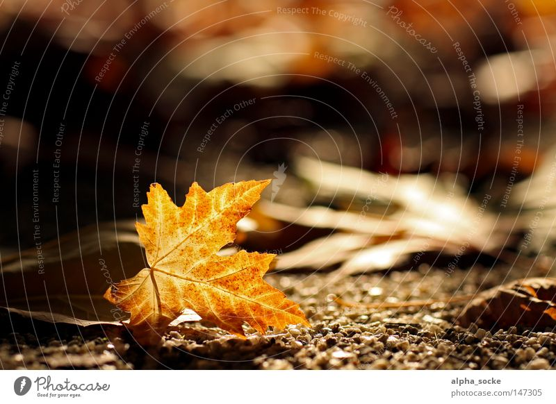 Tree Leaf Autumn Brown Gold Seasons October