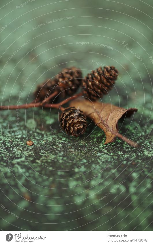 Nature Old Plant Green Leaf Environment Cold Natural Small Brown Gloomy Authentic Transience Round Dry Near